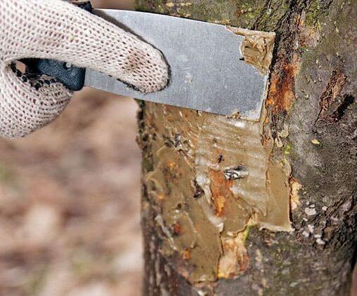 Пломбировка деревьев